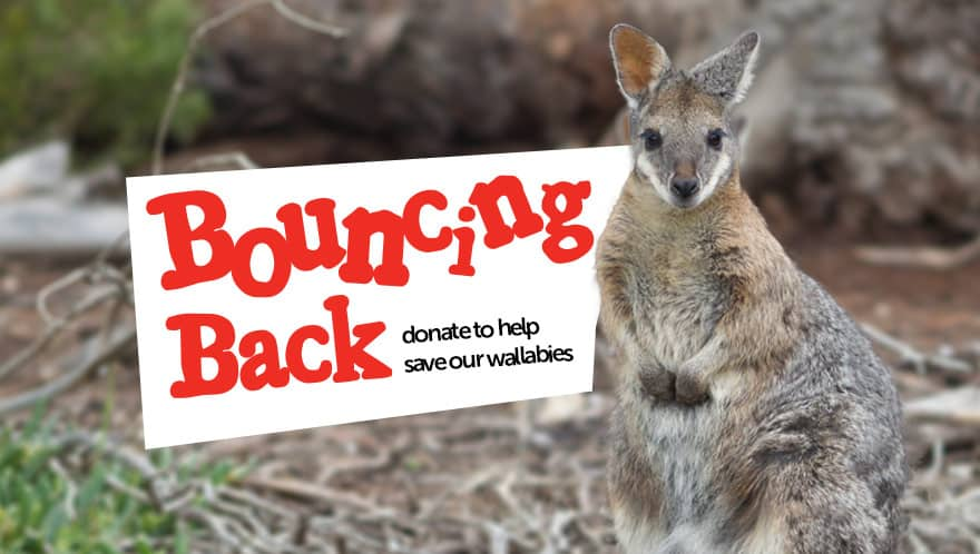 bouncing_back