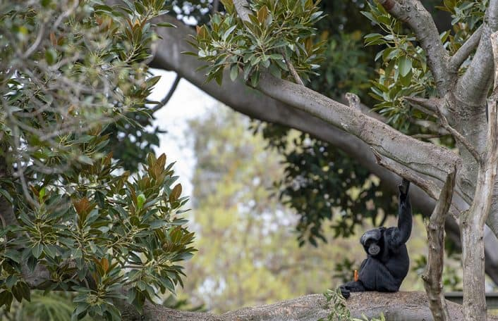 Plant extinction Zoos SA