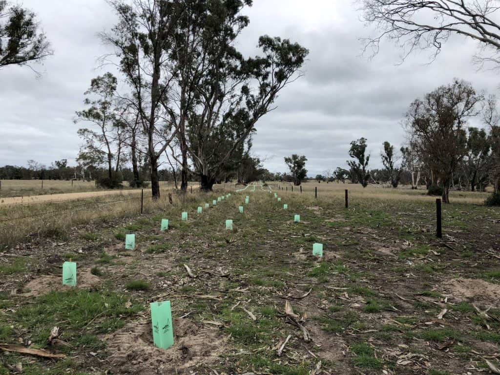 Cockatoo conservation planting