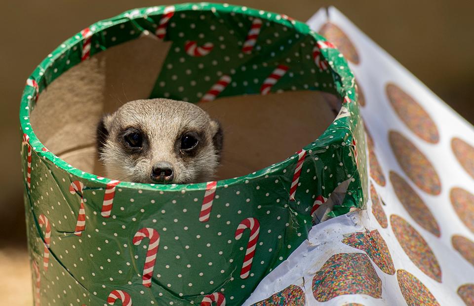 Christmas Zoos South Australia Zoos SA 2019