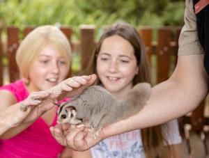 San Diego Zoo Kids TV squirrel glider Zoos South Australia