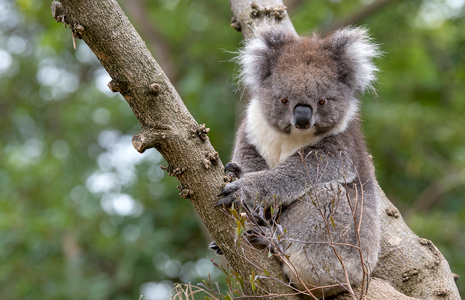Zoos South Australia bushfire ZAA wildlife conservation fund appeal