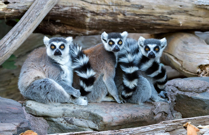 Zoos South Australia reopening COVID-19