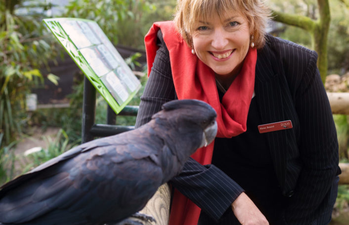 Elaine Bensted, CE of Zoos SA at Adelaide Zoo with Banks a Red-tailed Black Cockatoo