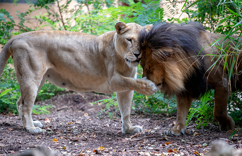 Zoos SA animal welfare science activity budgets