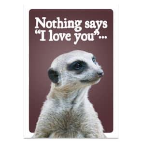 meerkat-front