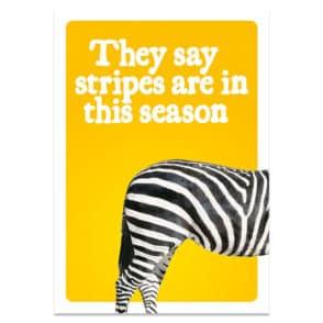zebra-front