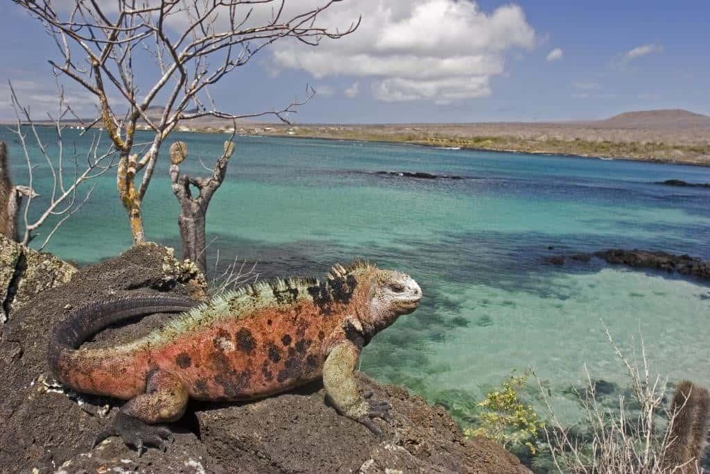 Peregrine_Galapagos__SS_26321017 - Copy