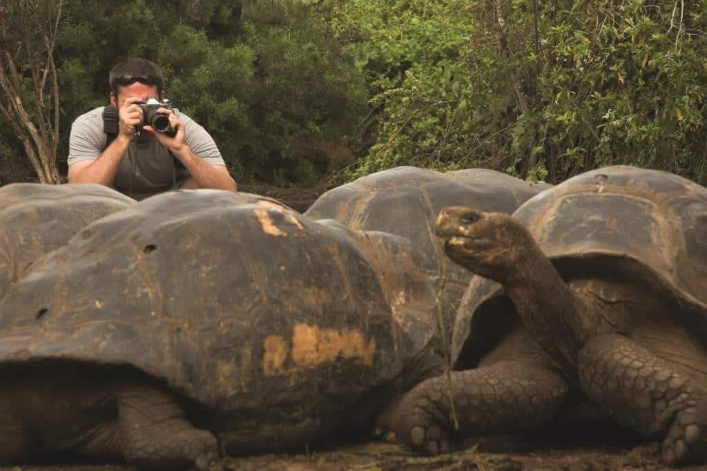 Peregrine_Galapagos_j.frankham©_004 - Copy